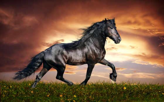 лошадь, mustang, permission, home
