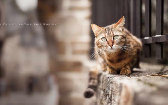 кот затаился на заборе