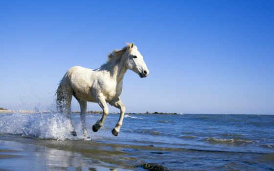 лошадь, берег, water