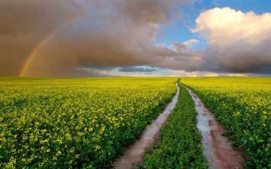 радуга, небо, дорога, margin, природа, рапс, тучи, красивые, картинка, красиво,