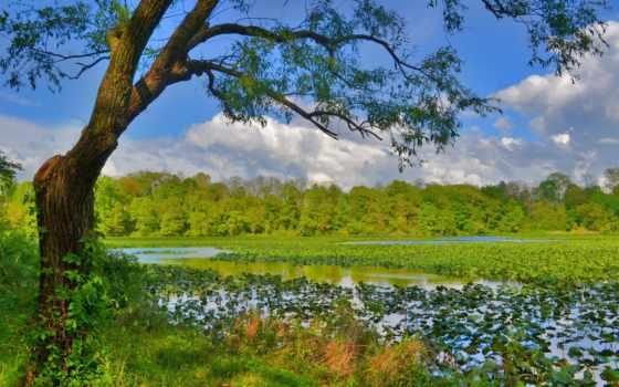 природа, категория, добавив, указав, улучшить, качество, нашем, сайте, качественные, природы,