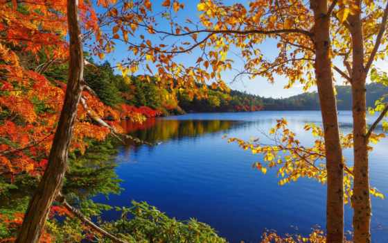 outono, árvores, floresta, lago, parede, céu, papéis, folhas, baixar, fundo,