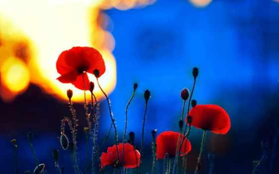 earth, цветы, flowers