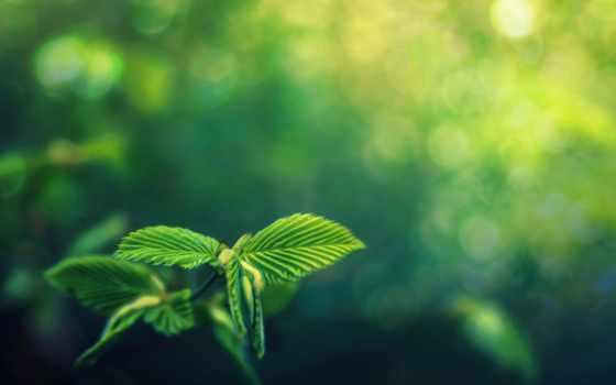 awakening, life, зелёный, symbio, цветов, природа, разнообразие, листва, sciences, день,