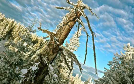 лес, winter, австрия, artist, sorted, interfacelift, desktop,