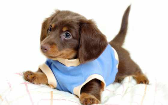 собака, dogs, zhivotnye