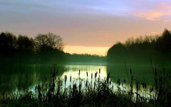 камыш, озеро, туман, утро, лес, небо, water,