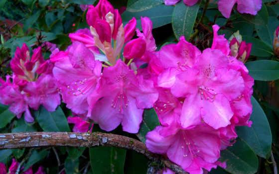 часть, красивые, cvety, открываются, страница, очень, изображения, осень,