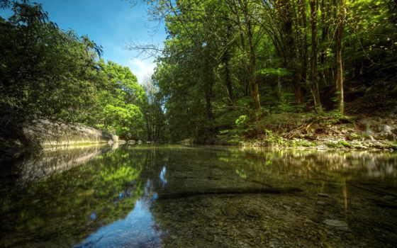 природа, река, summer, лес,
