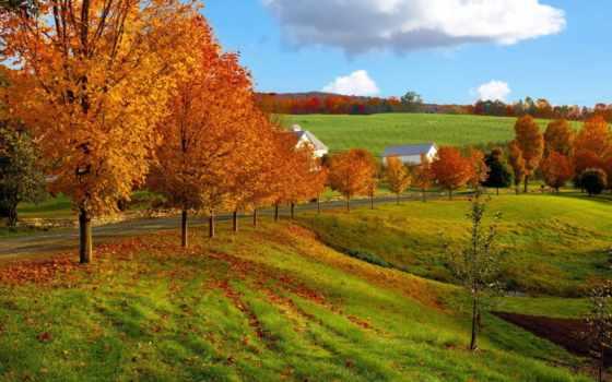 природа, осень, природы, дорога, небо, золотая, поле, дерево, summer, хорошем,