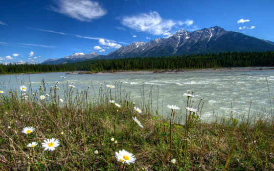 канада, landscape, rivers, паркс, daisies, mountains, природа, kootenay, vermilion,