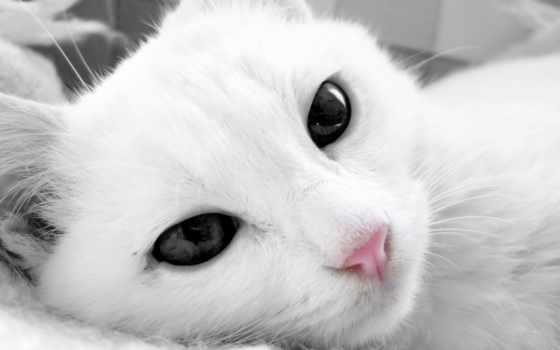 глазами, кот, кошки