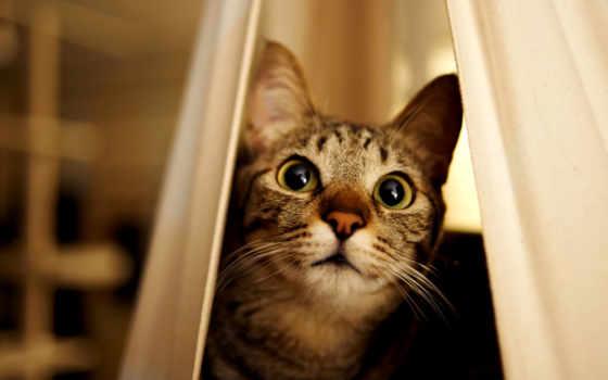 кот, взгляд, удивление, свет, котенок, язык, кошки, понимают, ус,