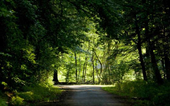 дорога, лес Фон № 11942 разрешение 1920x1200