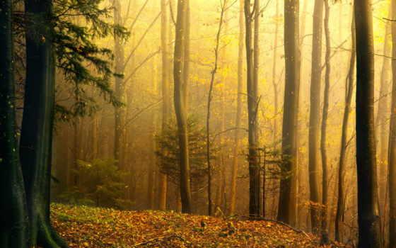 priroda, osen, les