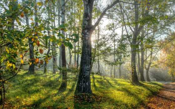 лес, сказочный, целикомв