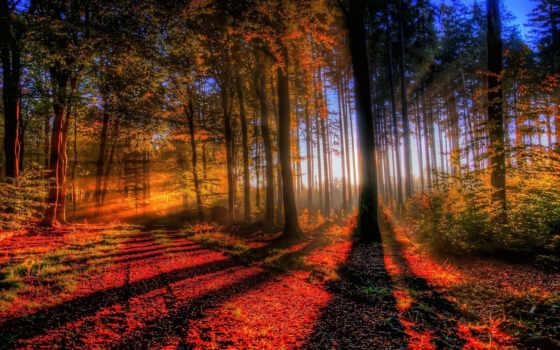 лес, закат, осень