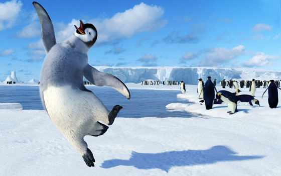 пингвины, пингвинов, мужчина
