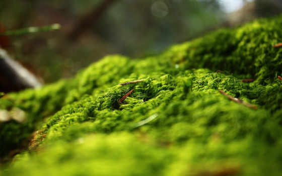 трава, весенняя, фоны