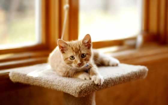 котенок, играет, white, взгляд, кот, кошки, лежит, игрушками, плюшевыми, red, серый,