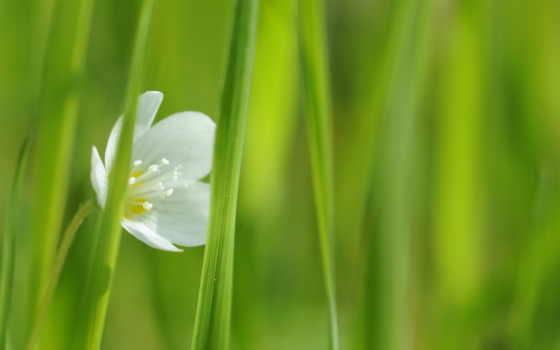 fleurs, cvety, фотопанно, ecran, fond, весенние, blanche, printemps, fleur, фотообои, доставка,