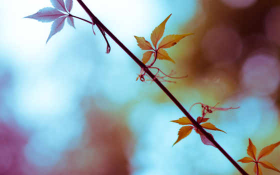 allah, loves, красавица, deviantart, красивых, осени,