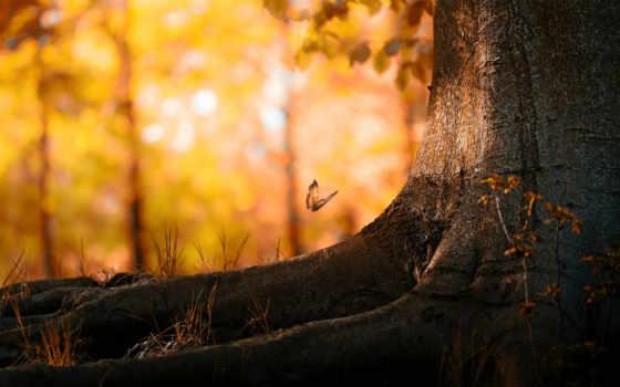 осень, природа, рисунки, фоновые, красивые,