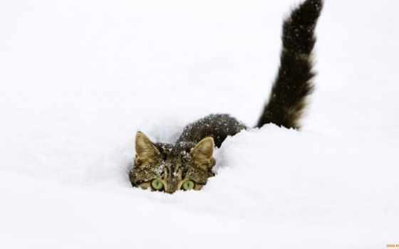 кошки, снег, любят