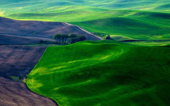 margin, зеленые, панорама, пейзажи -, луга,