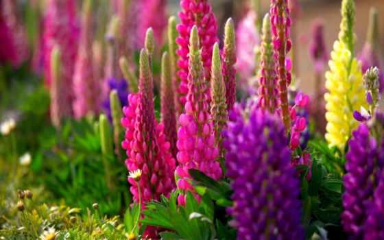 растение, красивое, растения, многолетнее, очень,