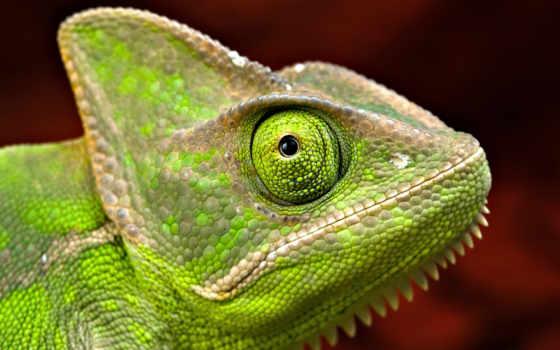 iguana, tinta, стену