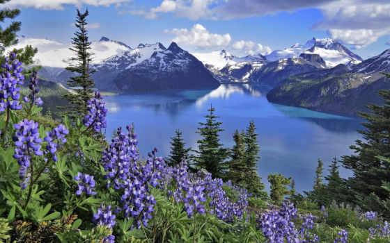 цветы, горы, landscape