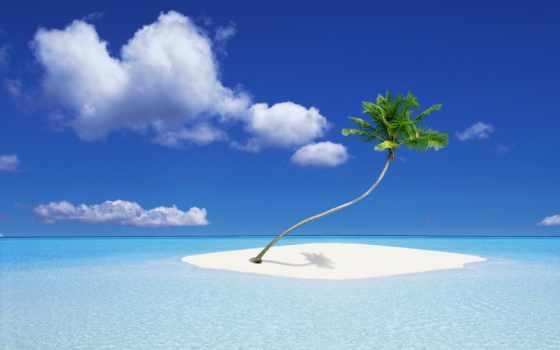пляж, море, ocean, рай, песок, мойка, hawaii, собака,