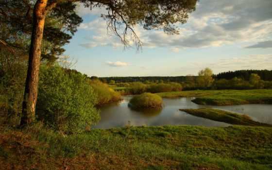 pine, река, природа, пейзажи -, прогулка, небо, отдых,