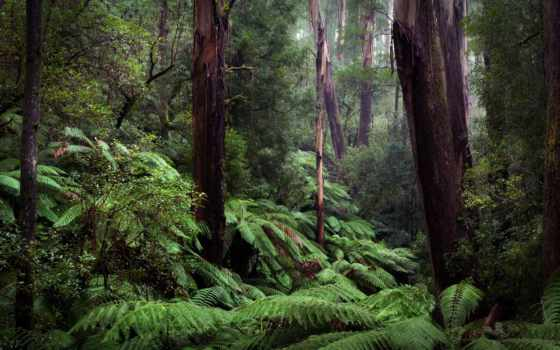 amazon, rainforest, природа, box, cute, лес,