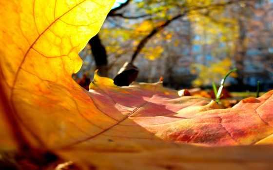 осени, cvety, ноябрь, осень, нояб, вид,