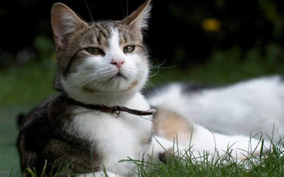 кот, free, природа, iphone, other, траве,