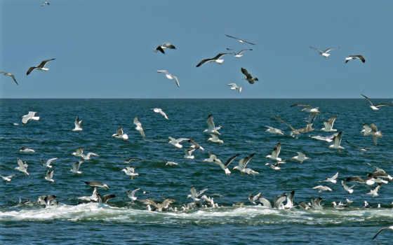 ecosia, над, морем, чайки, птицы, море,
