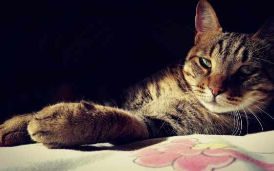 кот, сиамский, animal, собака, закат, город