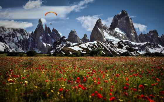 гора, landscape, поле, poppy, toggle, navigation, сорт, popularity, весна