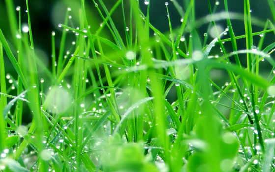 grass, листья