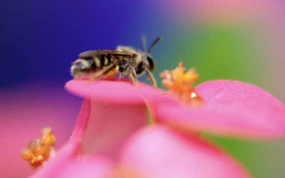 животные, пчела