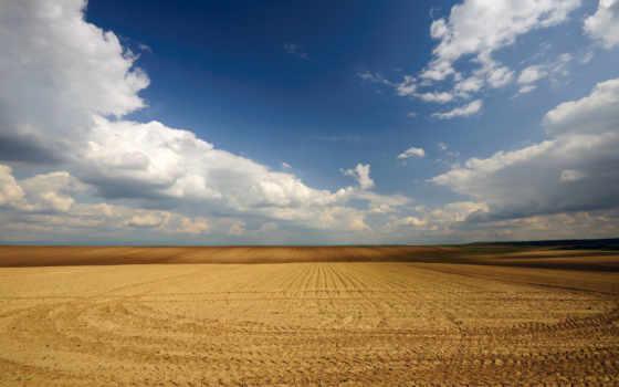 поле, природа, поля