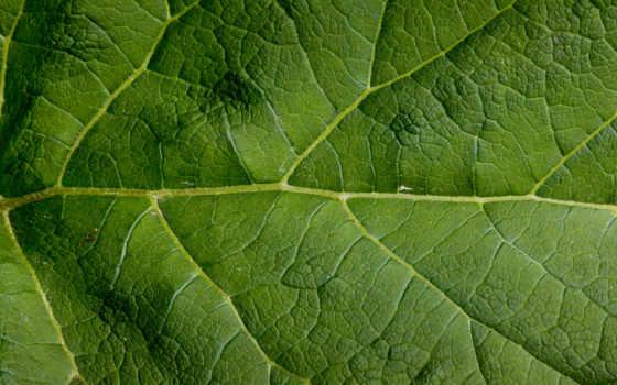 pattern, leaf, текстуры