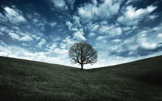 дуб, дерево, desktop, landscape, trees, high, ворона,