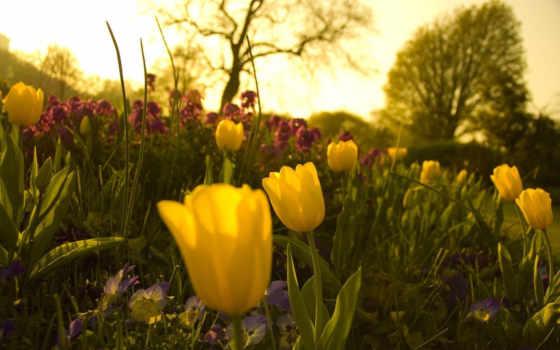 flowers, весна, garden, sunshine, цветы, tulips, preview,