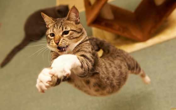 кот, кошки, коты, cats, тест, кошек, funny, смешные, кошках,