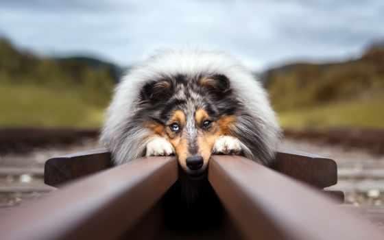 собака, уже, лучшая, загружено, коллекция,
