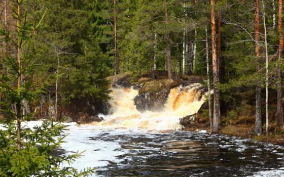 природа, леса, деревья