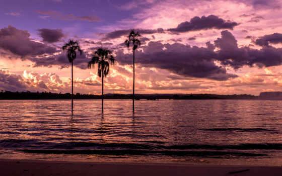 palm, закат, пальмы